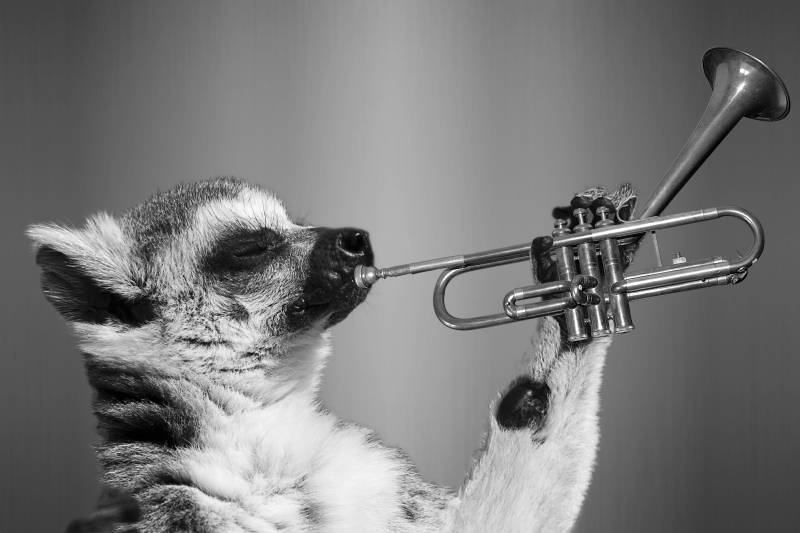 Small, cute, trumpet-playing creature